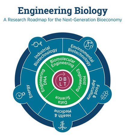 Roadmap encourages federal investment in synthetic biology research